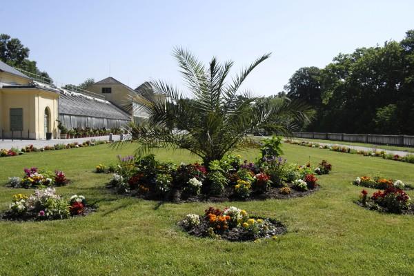 Palme vorm Palmenhaus